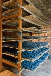 Avignonesi Vin Santo Grapes